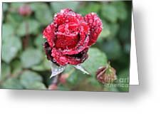 Rain Drop Rose Greeting Card