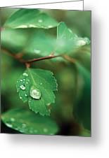 Rain Droplet On Leaf Greeting Card