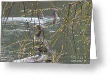 Rain Droplets  Greeting Card