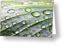 Rain Drops On A Leaf Greeting Card