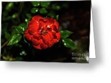 Rain Drops On A Rose Greeting Card