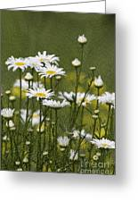 Rain Drops On Daisies Greeting Card