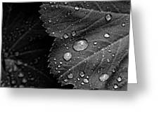 Rain Drops On Leaf Greeting Card