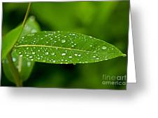 Rain Drops On Leaves #1 Greeting Card