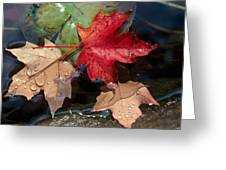 Rain Drops On Leaves Greeting Card