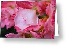Rain Falls On Petals And All Greeting Card