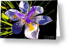 Rain Flower Morning Greeting Card