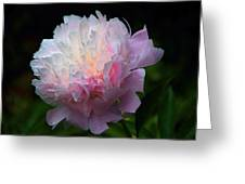 Rain-kissed Peony Greeting Card