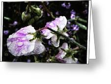 Rain Kissed Petals. This Flower Art Greeting Card