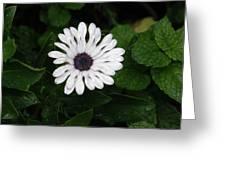 Rain On A White Flower Greeting Card