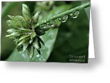 Rain On The Umbrella Plant 2 Greeting Card
