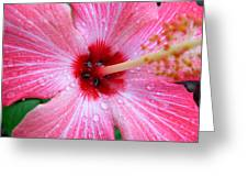 Rain Petals Greeting Card