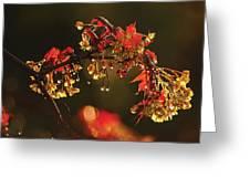 Rain Soaked Leaves-1 Greeting Card