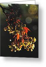 Rain Soaked Leaves-3 Greeting Card