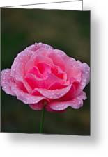 Rain Spattered Rose Greeting Card