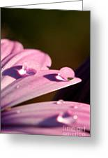 Rain Water On Daisy One Greeting Card