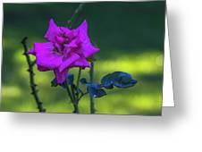 Rain Wet Rose 2 Greeting Card