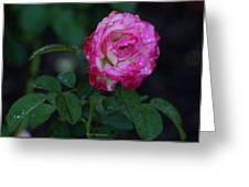 Rain Wet Rose Greeting Card
