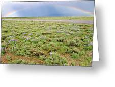 Rainbow And Lupine, Grand Teton Nm, Wyoming Greeting Card