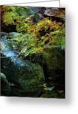 Rainbow Autumn Ferns At Pickle Creek 6303 H_3 Greeting Card