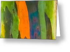 Rainbow Eucalyptus 5 Greeting Card
