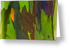 Rainbow Eucalyptus 6 Greeting Card