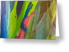 Rainbow Eucalyptus 7 Greeting Card