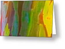 Rainbow Eucalyptus 8 Greeting Card