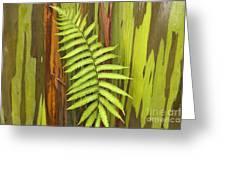 Rainbow Eucalyptus And Fern Greeting Card