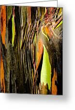 Rainbow Eucalyptus Bark Greeting Card