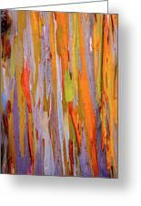 Rainbow Eucalytpus Greeting Card