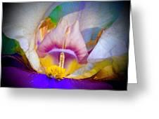 Rainbow In The Iris Greeting Card