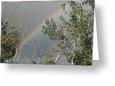 Rainbow In The Trees Greeting Card