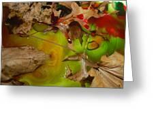 Rainbow Leaves 3 Greeting Card