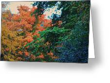 Rainbow Of Fall Greeting Card