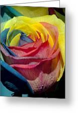 Rainbow Of Love 2 Greeting Card by Karen Musick