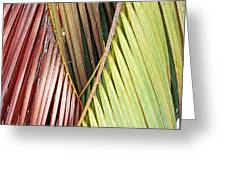 Rainbow Of Palms Gp Greeting Card