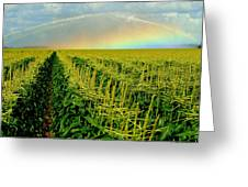 Rainbow Over The Cornfields Greeting Card