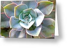 Rainbow Succulent - My Cup Runneth Over Greeting Card