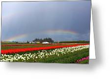 Rainbows At Tulip Festival Greeting Card