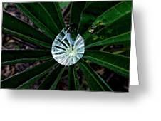 Raindrop Ammonite Greeting Card