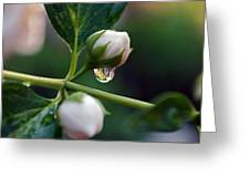 Raindrop Garden Greeting Card