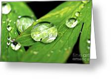Raindrop Greeting Card