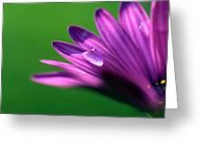 Raindrop On Purple Petal Greeting Card