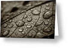 Raindrops #1 Greeting Card