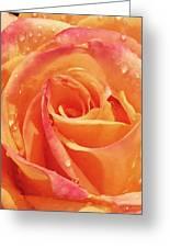 Raindrops And Petals Greeting Card