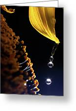 Raindrops From Sunflower Petal Greeting Card