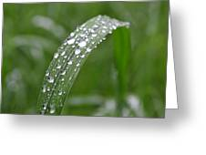Raindrops On A Blade Of Grass Greeting Card