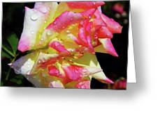 Raindrops On A Rose Greeting Card