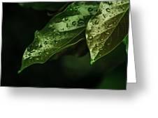 Raindrops On Avocado Leafs Greeting Card